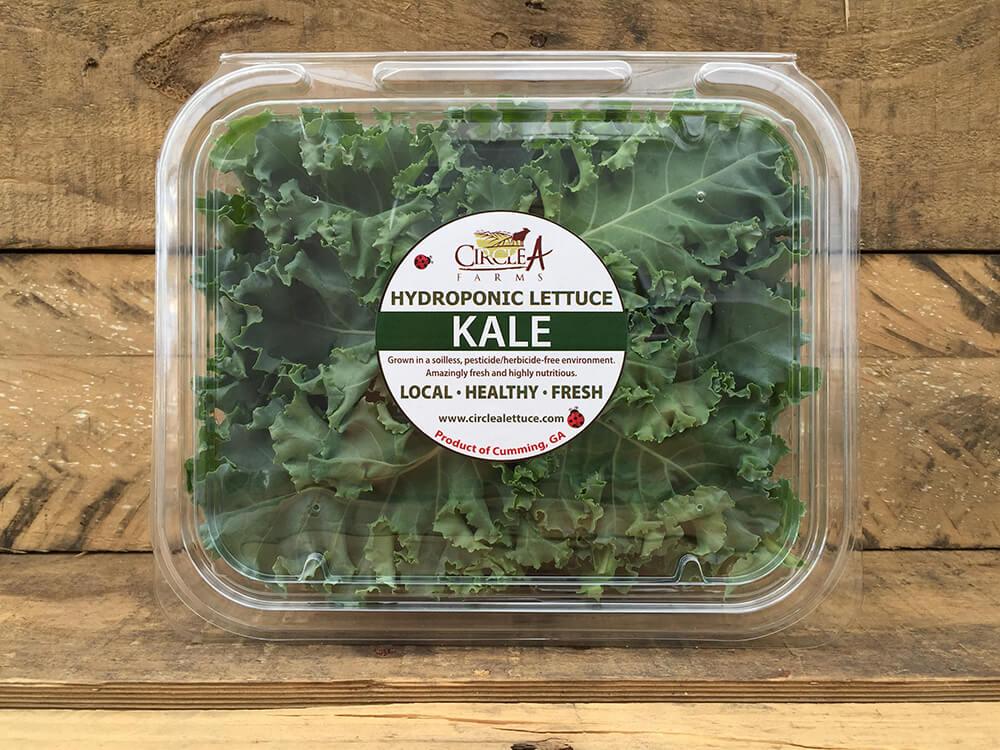 Baby Kale Lettuce